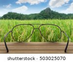 Conceptual Image Of Rice Field...