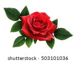 red rose flower and leaves... | Shutterstock . vector #503101036