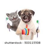 Stock photo happy kitten and pug puppy holding a toothbrushes and showing thumbs up isolated on white 503115508