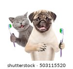Stock photo happy kitten and pug puppy holding a toothbrushes isolated on white background 503115520