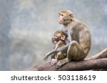 Image Of Mother Monkey And Baby ...