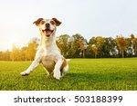 crazy playfull cool dog dancing ... | Shutterstock . vector #503188399