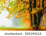 autumn forest and fog near the... | Shutterstock . vector #503194213