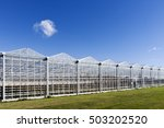 Greenhouse In Westland In The...