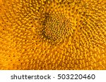 Closeup Of A Sunflower...