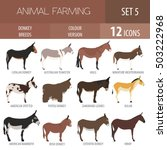 donkey breeds icon set. animal... | Shutterstock .eps vector #503222968