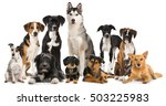 group of different dogs | Shutterstock . vector #503225983