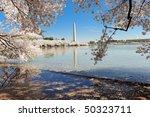 Washington D.c. Cherry Blossoms