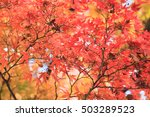 colorful autumn leaves | Shutterstock . vector #503289523