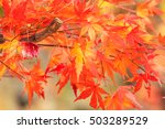 colorful autumn leaves | Shutterstock . vector #503289529