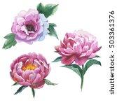 wildflower peony flower in a... | Shutterstock . vector #503361376
