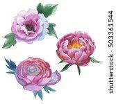 wildflower peony flower in a... | Shutterstock . vector #503361544