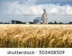 Wheat fields and grain elevator in Sidney, Montana during a rain storm on a summer day.