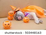cute pug dog with costume of... | Shutterstock . vector #503448163