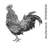 rooster  white background  one  ... | Shutterstock . vector #503460646