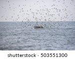 bryde's whale  eden's whale. | Shutterstock . vector #503551300