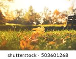 Close Up On Autumn Leaves In...