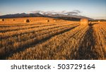 Harvested Field With Hay Bales...