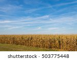 American Farmland Of Corn ...