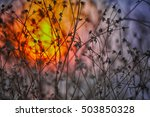 dried flowers on a background... | Shutterstock . vector #503850328