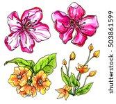 tropical flowers blossom... | Shutterstock . vector #503861599
