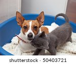 a jack russell terrier with... | Shutterstock . vector #50403721