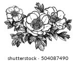flowers isolated vector... | Shutterstock .eps vector #504087490