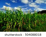 Corn Field And Sky With...