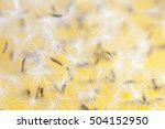 dandelion background | Shutterstock . vector #504152950