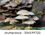 A group of yellow to orange mushroom on the forest floor next to a tree stump seen from ground level in autumn