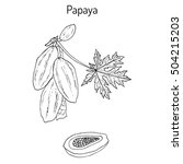 papaya  carica papaya   or... | Shutterstock .eps vector #504215203