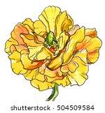 Yellow Anemone Flower Blossom....