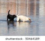 The Black Dog Sniffs White To ...