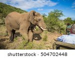 south africa   january 15 ... | Shutterstock . vector #504702448