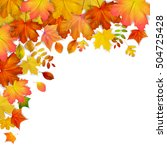 colorful autumn maple leaves... | Shutterstock . vector #504725428