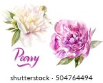 peonies flower watercolor... | Shutterstock . vector #504764494