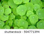 vivid green leaves background | Shutterstock . vector #504771394
