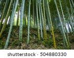 bamboo | Shutterstock . vector #504880330