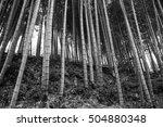 bamboo | Shutterstock . vector #504880348