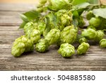 fresh green hops | Shutterstock . vector #504885580