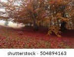 landscape | Shutterstock . vector #504894163