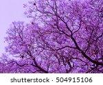 Beautiful  Blooming Violet...