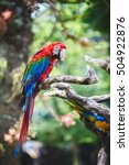 bright parrot on a branch | Shutterstock . vector #504922876