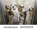locked kennel dogs abandoned ... | Shutterstock . vector #504952339