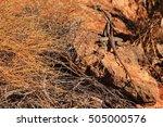 australian lizard   Shutterstock . vector #505000576