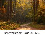 colorful autumn forest | Shutterstock . vector #505001680