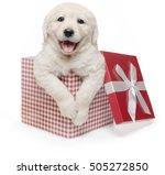 Stock photo white golden retriever christmas puppy gift box present surprise labrador 505272850