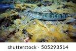 Diving  Ocean  Fishes  Depth ...