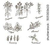 herbs marjoram  basil  oregano  ... | Shutterstock .eps vector #505303633