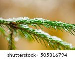 Macro Shot Of Snowy Branches O...